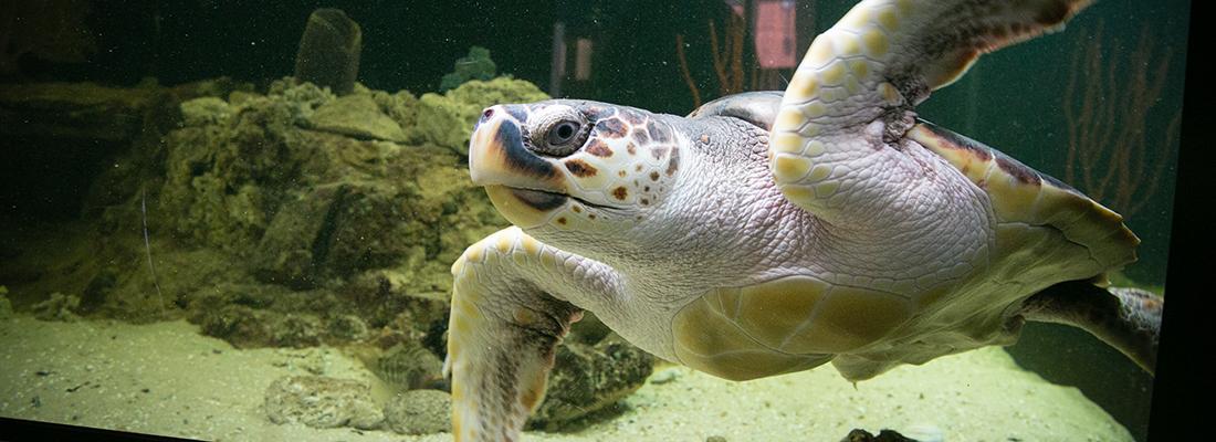 New Friends Program Will Help Uga Aquarium Expand Uga