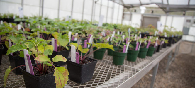 native-plant-sale-1