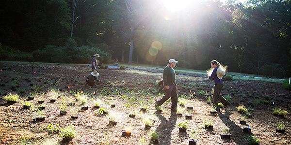 Native plants, grown at Bot Garden's Mimsie Lanier Center for Native Plant Studies, are being planted on the prarie on the hill to restore the natural habitat.