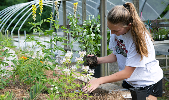 Local student brings pollinator program to Colham Ferry, helps school with STEM endeavors