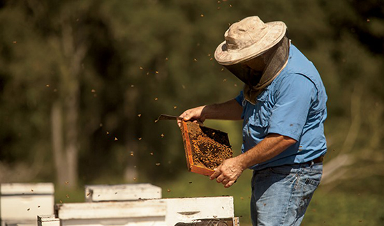 Honey from southwest Georgia in stores across U.S., thanks to SBDC and federal loan