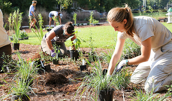 Native plants brought to campus by State Botanical Garden an education tool for students