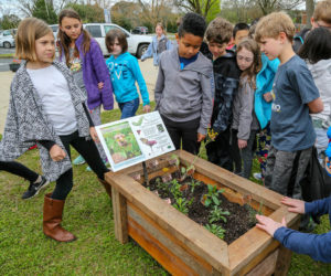 Oconee County High School Environmental Club plants Connect to P