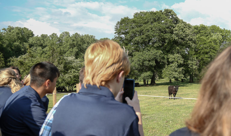 Taking photos of cows at Wakefield Farm.
