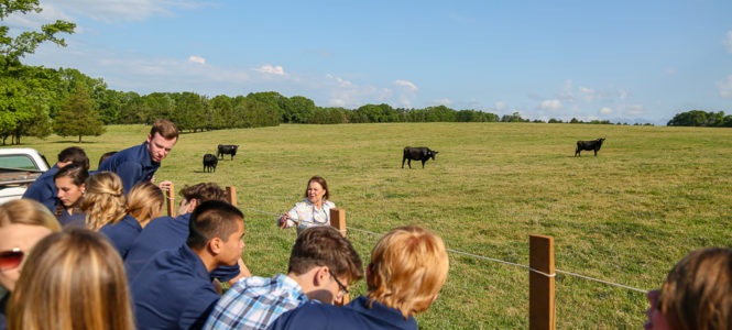 Up close lessons about cattle.
