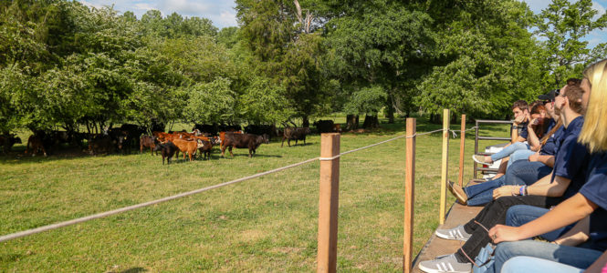 Genetics, biology, chemistry are all at work on cattle farms.