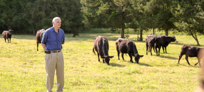 Dick Phillips with his cows.