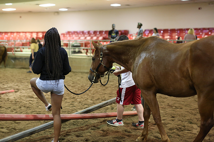 A girl steps over a jump, leading a horse to it. Another student stands on the other side of the horse.