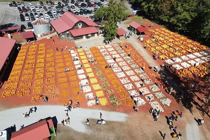An aerial shot of Johnny and Kathy Burt's pumpkin farm.