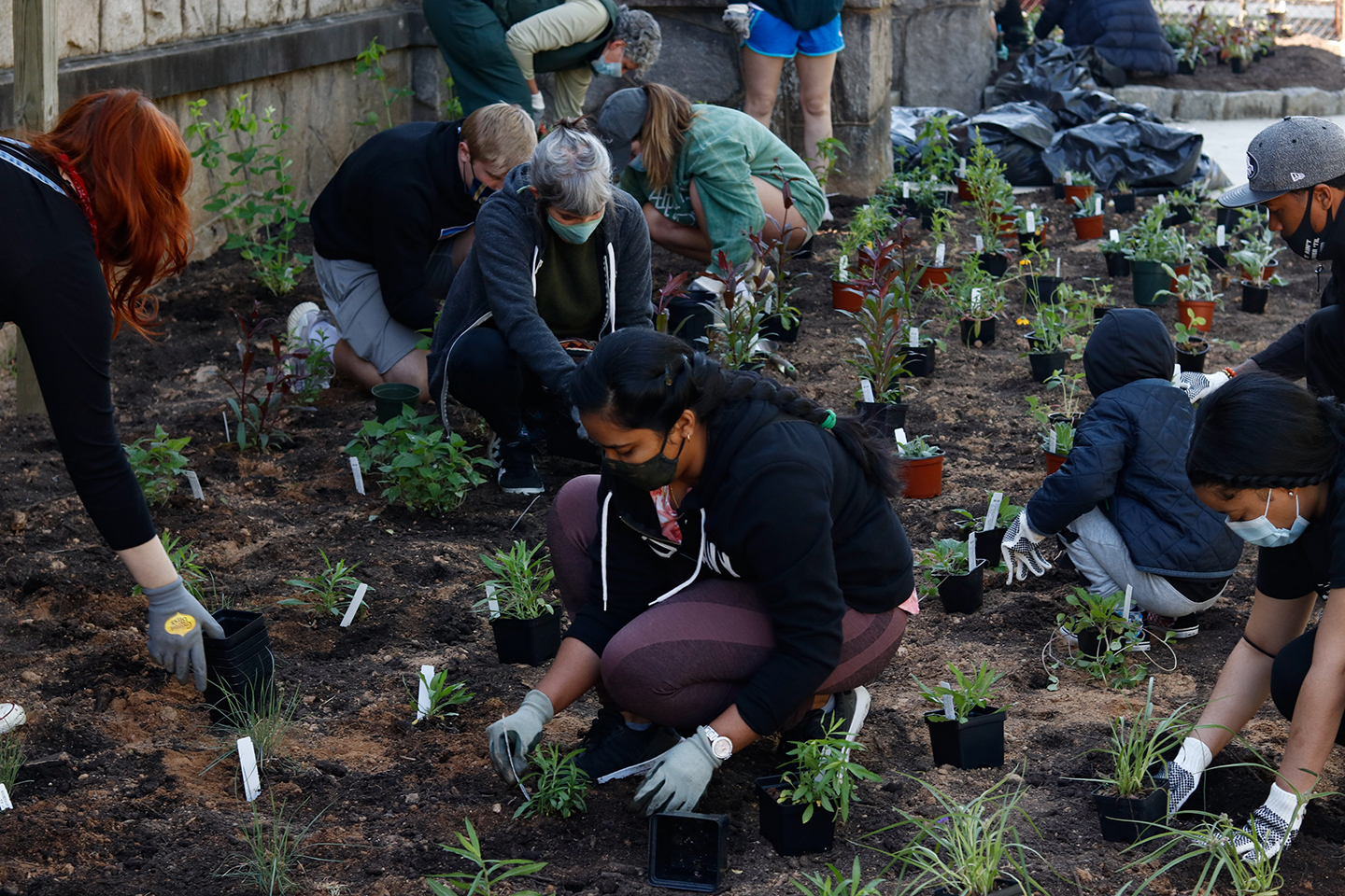 People planting pollinator plants in the ground