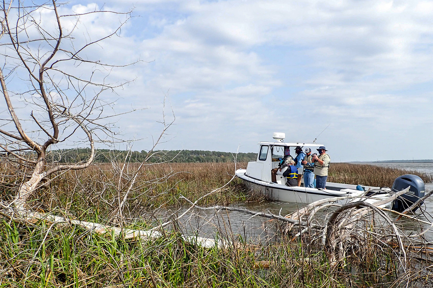 Eco tourists on a boat in the marsh