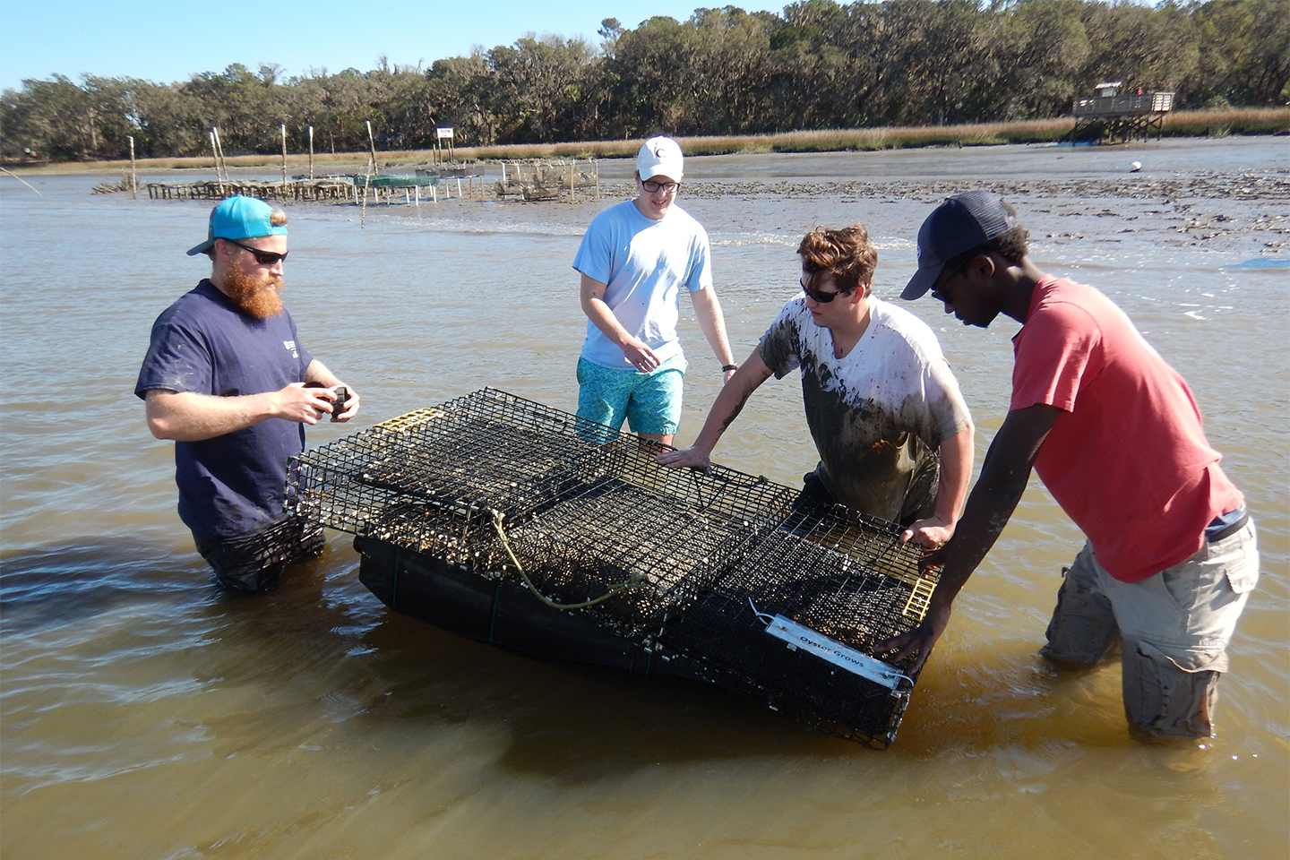 Four people holding an oyster cage in the water