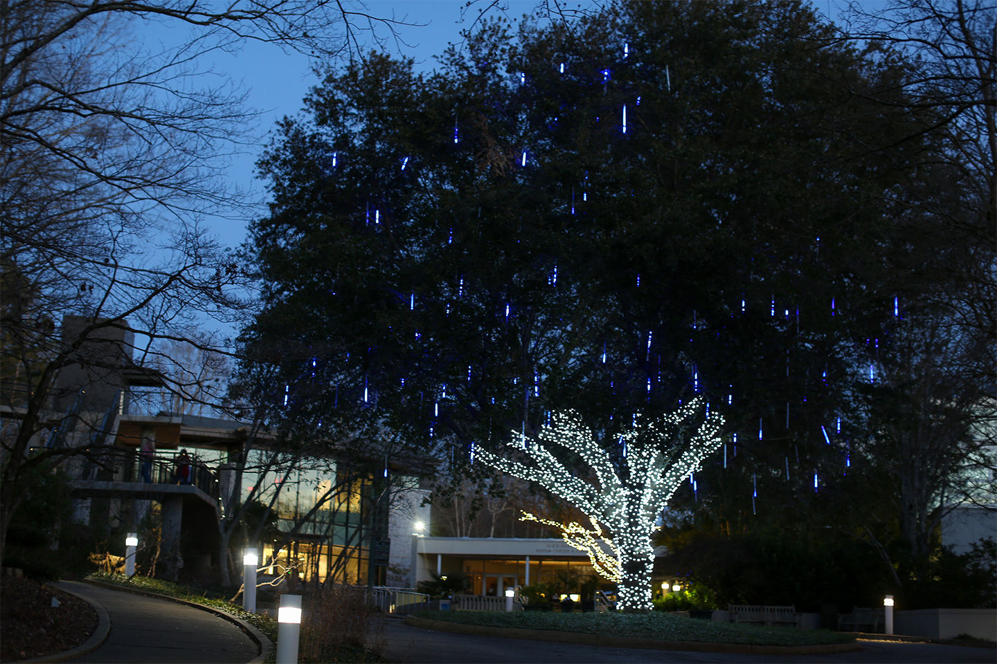 An illuminated tree at night in the State Botanical Garden of Georgia.